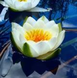 водные и болотные растения