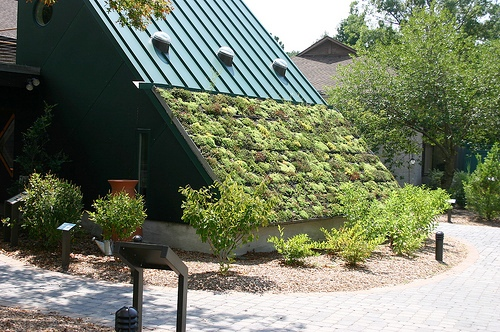 живая крыша (зеленая крыша)