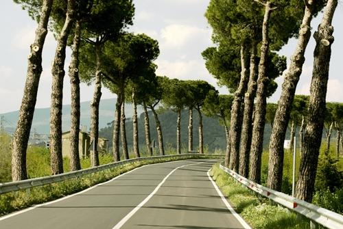 деревья - ландшафтный дизайн фото
