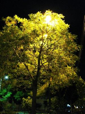 освещение сада фото