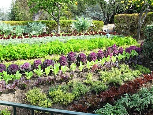 съедобный сад