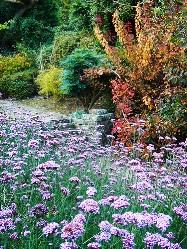 rock garden альпинарий