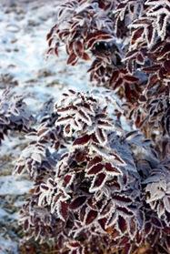 подготовка кустарников к зиме