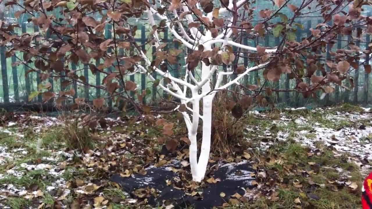 подготовка деревьев к зиме