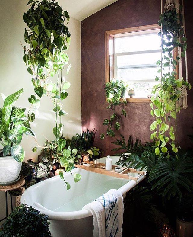 Растения в ванной или интерьер залитый зеленью